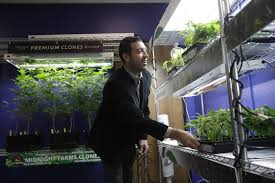 hemp crops may be grown by navajo nation native americans native american tribes consider entering marijuana business