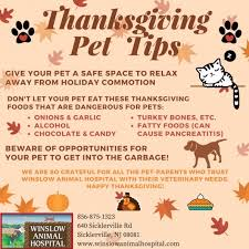 thanksgiving pet safety tips winslow animal hospital your