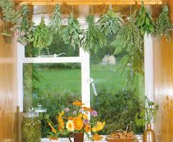 herbs indoors herbs indoors