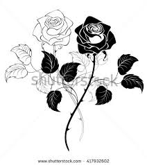 two artistically drawn black roses on stock vector 113838298