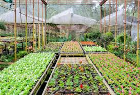 plant nursery of flowers and ornamental plants in northen thailand