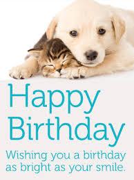 kitten greeting cards birthday u0026 greeting cards by davia free