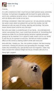 dog condolences sensation dog away opinions purdueexponent org