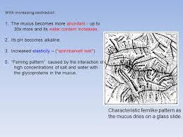 ferning pattern in spanish menstruation ovulation ppt video online download