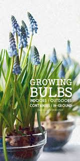 Indoor Garden Containers - growing bulbs bulbs outdoors and plants