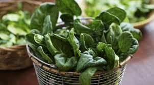 cuisiner epinard comment cuisiner les épinards frais astuces de cuisine et recettes