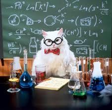 Cat Meme Maker - chemistry cat meme generator imgflip