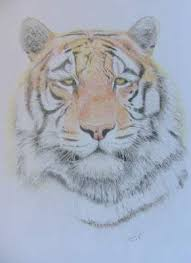 online contest best colored pencil sketch