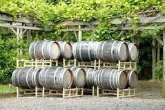 Trellis Wine Trellis With Wine Royalty Free Stock Photo Image 25952665