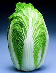 cabbage china napa cabbage mild flavor year planting