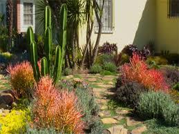 cactus landscaping cactus rock garden ideas cactus garden