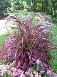 best 25 front yard flowers ideas on front yard plants
