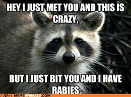 Funny Meme Animals - hey i just met you and this is crazy funny animal meme