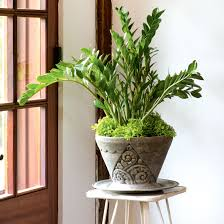 Home Plants by 4 Durable Indoor Plants For Your Home Canadian Living