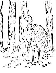 wild turkey coloring page samantha bell