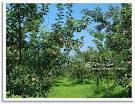 เที่ยวเกาหลี แวะสวนแอปเปิ้ล หัดทำกิมจิ ใส่ชุดฮันบก ชมพระราชวังเีคี ...
