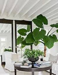 live indoor plants live plants archives greenmylife anyone can garden