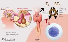 7 signs of an underactive thyroid drjockers com