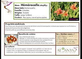 les fleurs comestibles en cuisine les fleurs comestibles dans un jardin permaculture formation