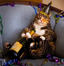 Happy New Year Cat Meme - it s caturday and 2016 happy new years cats cats vs cancer
