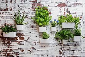 living wall garden starter kit modular indoor vertical planter