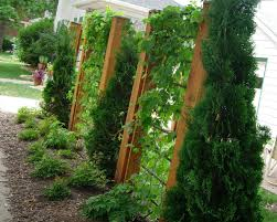 easy care gardens learn about low maintenance gardening trellis