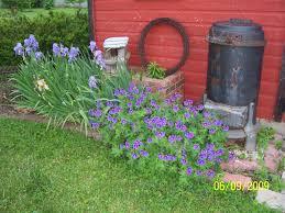 geranium garden ideas native garden design