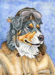 australian shepherd 9 monate australian shepherd original watercolor painting dog artwork pet