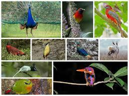 top 10 most beautiful birds in india wild nest