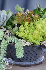 519 best succulents images on pinterest succulent containers