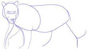 how to draw a tiger draw step by step