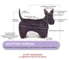 "Z A ""A Clip Ahead"" Scottie Grooming Grooming Pinterest"