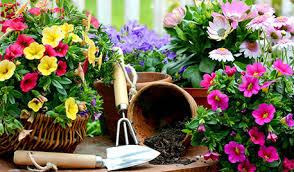 topfpflanzen balkon in aller frische kupsch gärtnertipps für balkon und terrasse