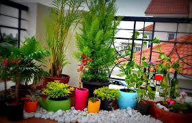 best small balcony garden ideas home design ideas