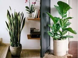 floor plants home decor indoor floor plants home designs ideas online tydrakedesign us