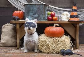 3 small towns 3 big halloween celebrations american profile