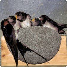 Barn Swallow Nest Pictures Artificial Nests For Barn Swallows Hirundo Rustica Pinterest