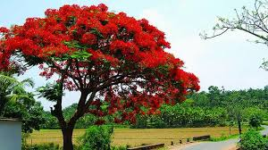hyderabad planting growing pretty trees is killing