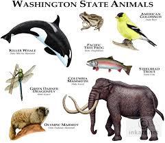 Washington wildlife images Wildlife art state animals jpg