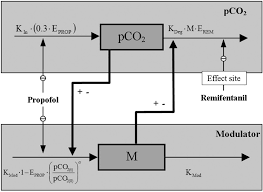 modeling respiratory depression induced by remifentanil and