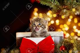 cat kitten under the christmas tree sits in a gift box with