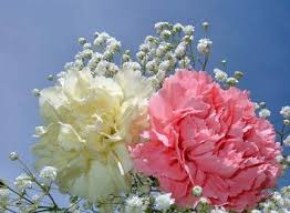 Birth Flower Of January - january u2013 birth flower com