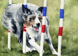 australian shepherd ebay australian shepherd art print signed by artist dj rogers