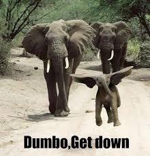Elephant Meme - dumbo get down funny elephant meme