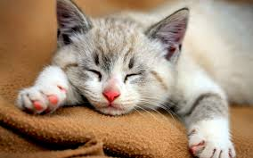 43 top selection of cat images