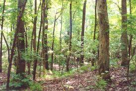 Texas forest images Hardwood forest east texas usa a photo from texas south jpg