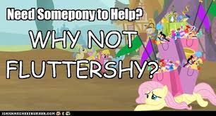 Mlp Fluttershy Meme - why not fluttershy meme by therealfry1 on deviantart
