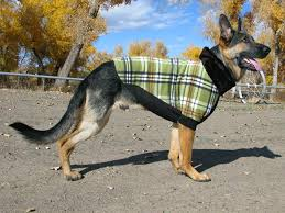 tripawds gear keep dogs warmfido fleece sweater