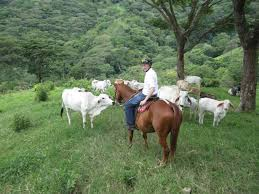 how far can a horse travel in a day images Horseback riding costa rica horse trek monteverde vacations jp
