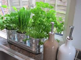 Kitchen Herb Garden Kit 20 Best Culinary Home Kitchen Ecosystems Images On Pinterest